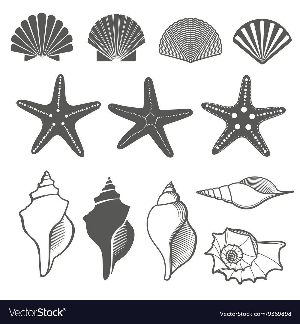 Sea shells and starfish set vector image