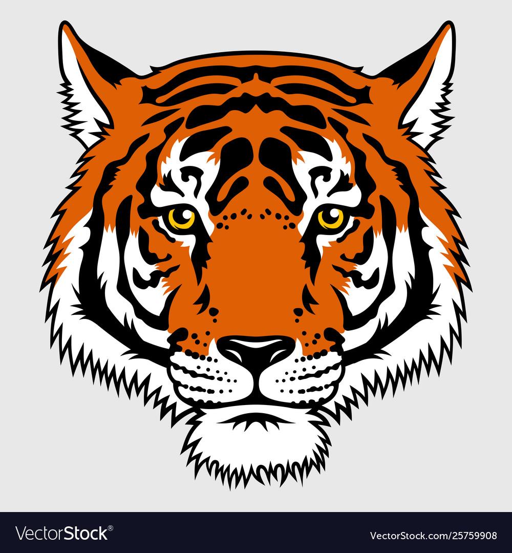 Tiger 016