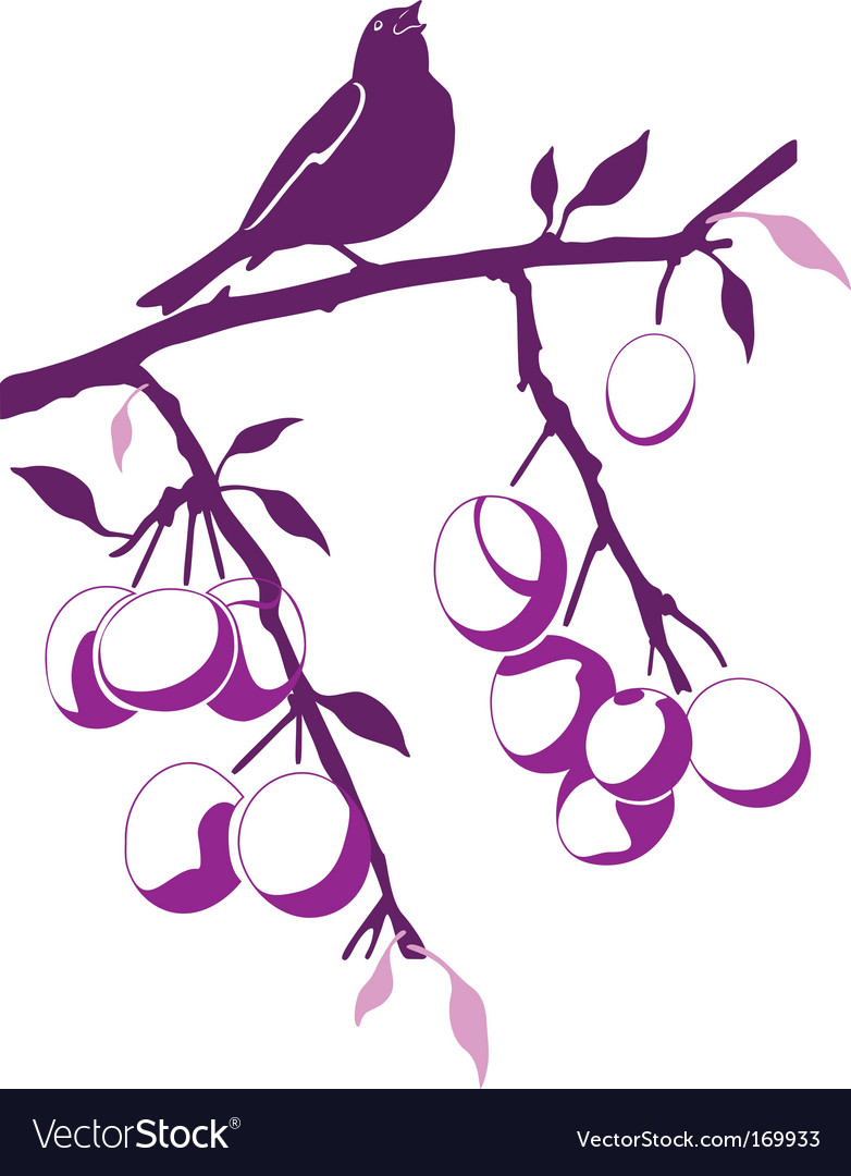 Bird on a plum branch vector image