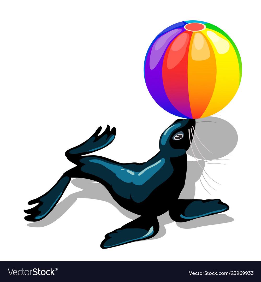 Circus animal sea lion with colorful ball isolated