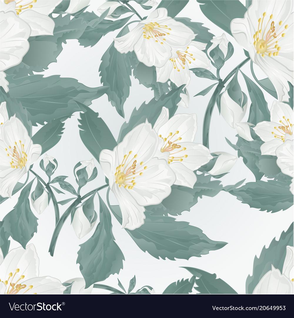 Seamless texture twig jasmine flower and buds