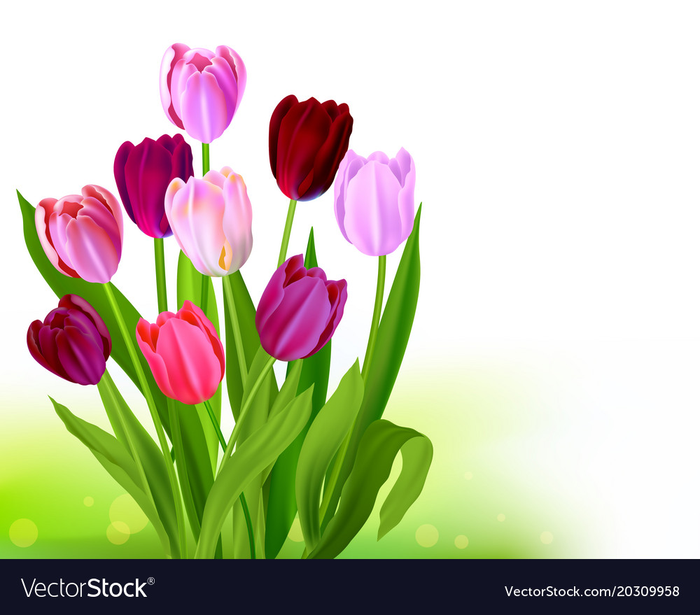 Bouquet Tulip Spring Banner Royalty Free Vector Image