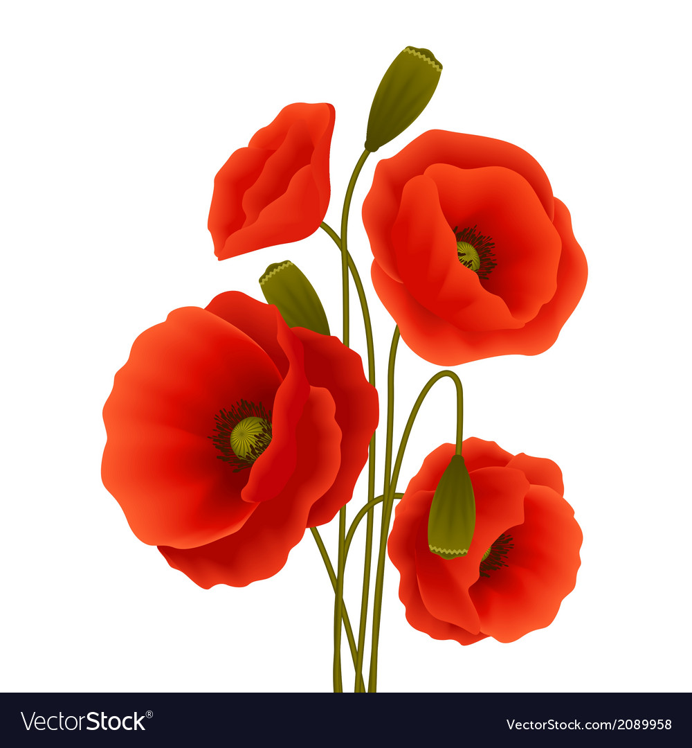 Poppy Flower Poster Royalty Free Vector Image Vectorstock