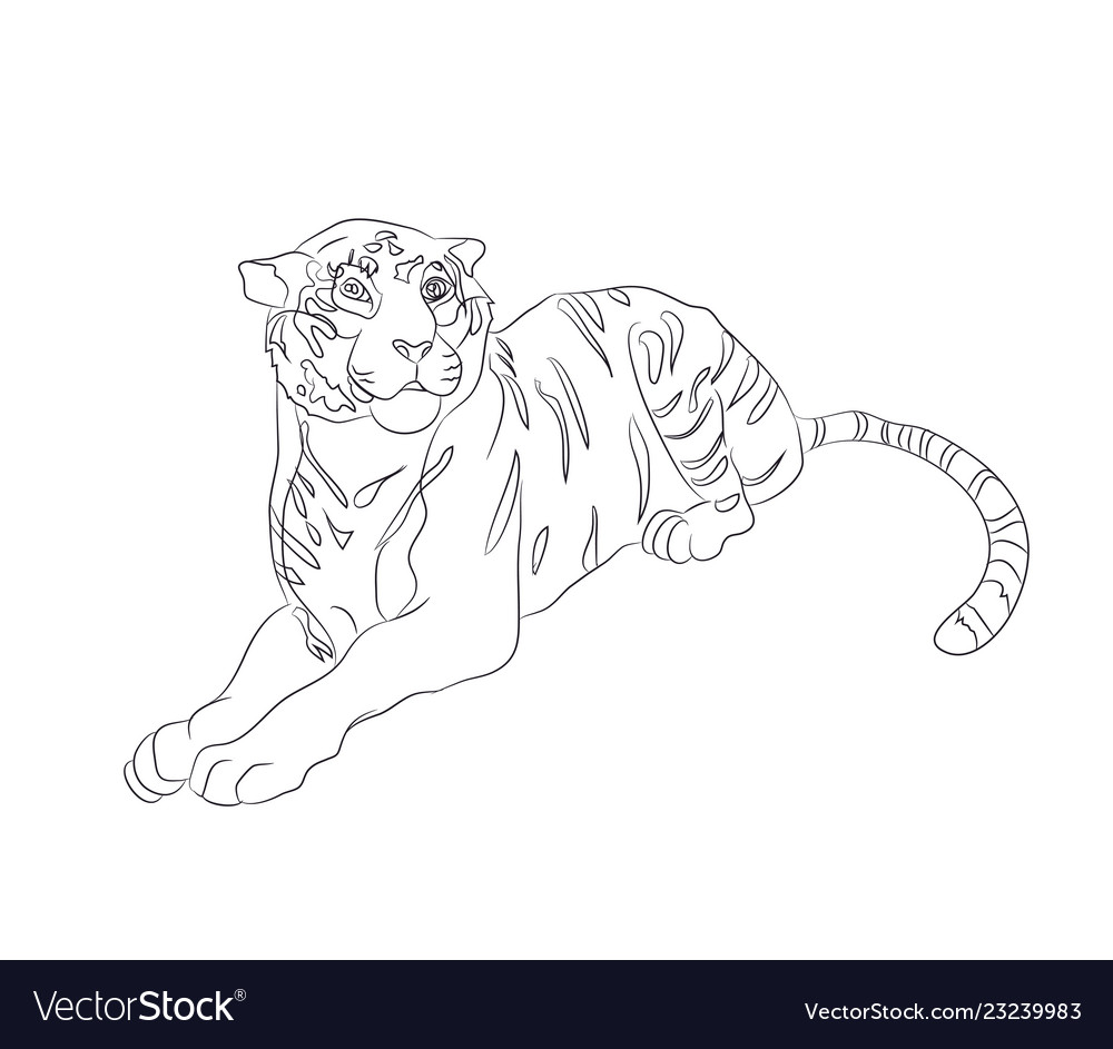 A tiger that lies drawing by