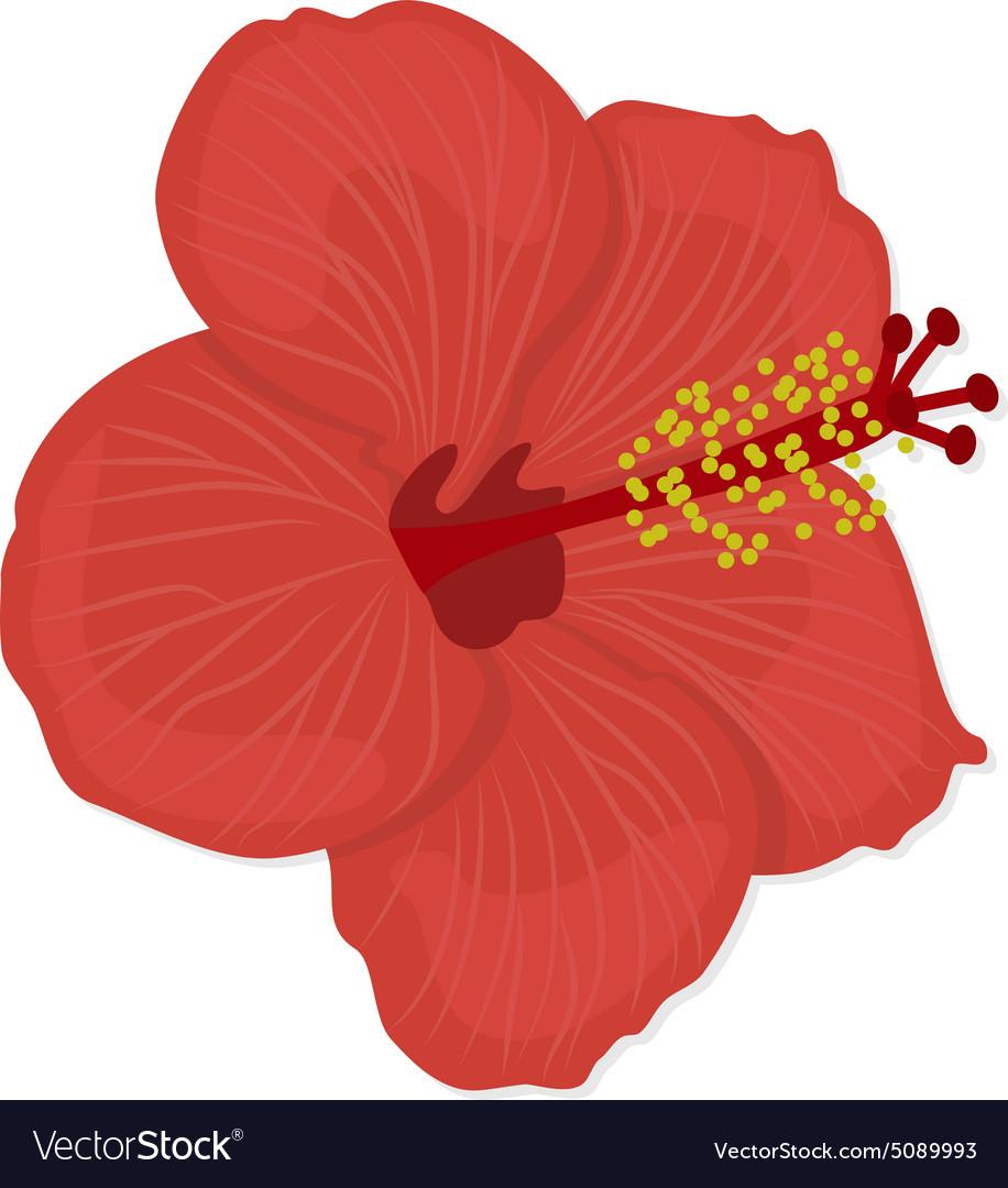 Hawaiian hibiscus flower royalty free vector image hawaiian hibiscus flower vector image izmirmasajfo
