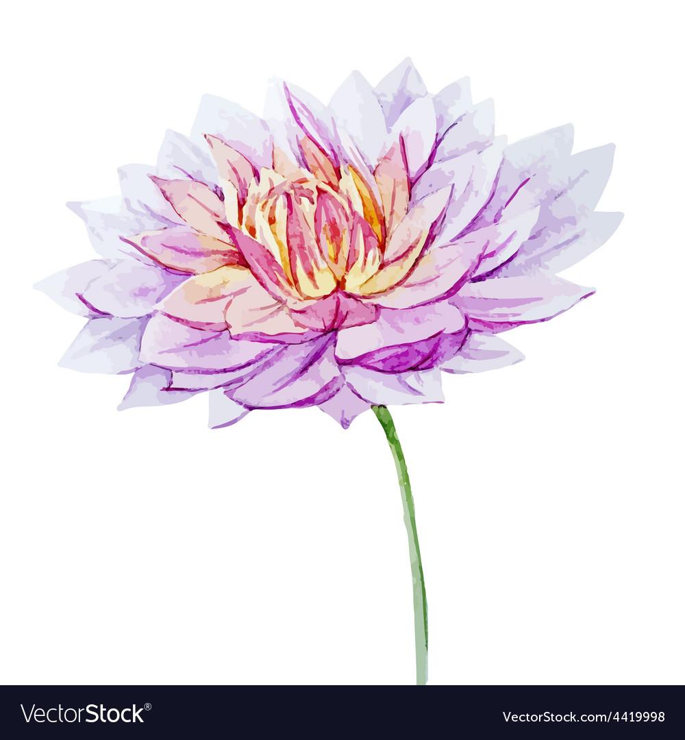 Watercolor dahlia flowers royalty free vector image watercolor dahlia flowers vector image izmirmasajfo