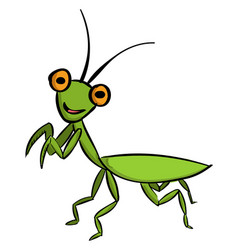 Green mantis on white background vector