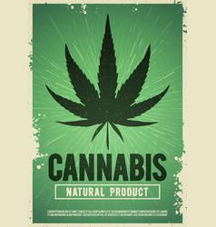 Medical cannabis plant marijuana weed poster vector