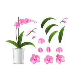 realistic detailed 3d potted tropical orchid and vector image