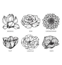 set flower and leaf hand drawn botanical vector image