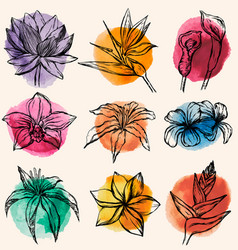 Set of tropical flowers with c vector