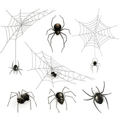 Spiders and spider web set vector