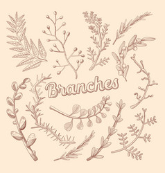 branches hand drawn floral doodle rustic plants vector image vector image