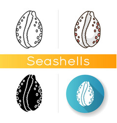 Cowrie shell icon vector