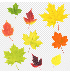Autumn leaves set isolated transparent background vector