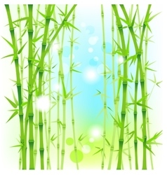 Bamboo fresh background vector