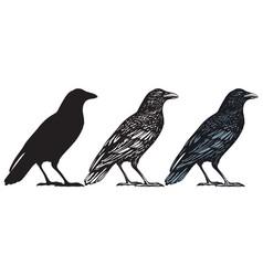 Hand-drawn black birds raven crow rook jackdaw vector