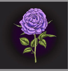 hand drawn violet rose flower isolated on black vector image vector image