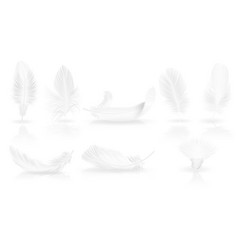 realistic soft white feathers on glossy background vector image