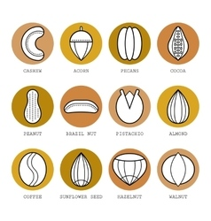 Set of flat different nuts vector image