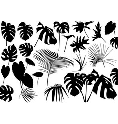 silhouetted tropical leaves set vector image