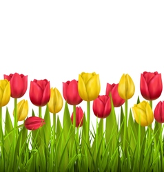 Green grass lawn with tulips isolated on white vector