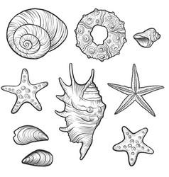 hand drawn seashells vector image