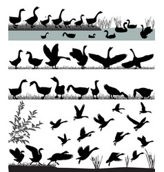 Flock of gooses vector