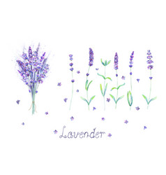 Lavender flowers bouquet lettering purple green vector