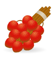 lychee isolated vector image