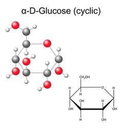 Structural chemical formula and model of glucose vector image
