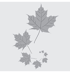 Falling leafs vector image vector image