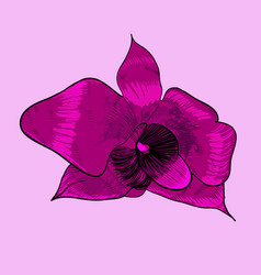Blooming decorative orchid concept vector