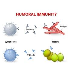 Humoral immunity vector