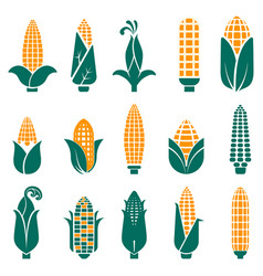sweet corn cobs icons collection in abstract vector image