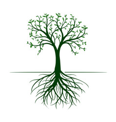 tree with leaves and roots on white background vector image