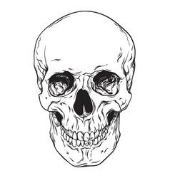 line art human skull isolated vector image