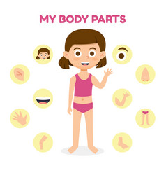 A girl with different parts vector