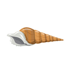 Design seashell and mollusk sign vector