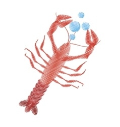 Hand drawing lobster sealife top view bubbles vector