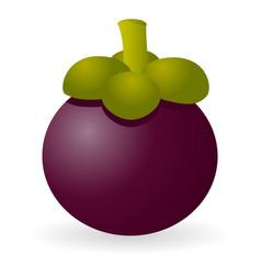 Mangosteen isolated vector