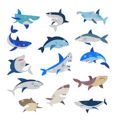 Shark cartoon seafish with sharp teeth in vector