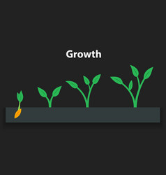 The process of growing plants stages and timeline vector