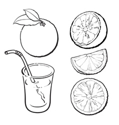 Oranges and a glass of freshly squeezed juice vector image