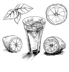 lemon vintage hand draw vector image vector image