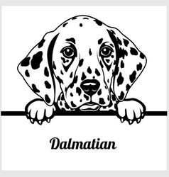dalmatian - peeking dogs - - breed face head vector image