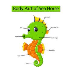 Diagram showing body part sea horse vector
