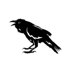 raven bird silhouette vector image