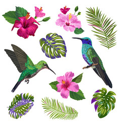 Hummingbird with tropical flowers vector