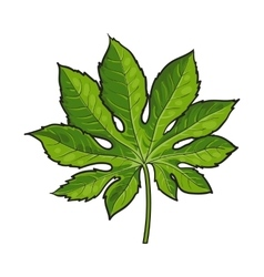 Full leaf of fatsia japonica palm tree sketch vector image